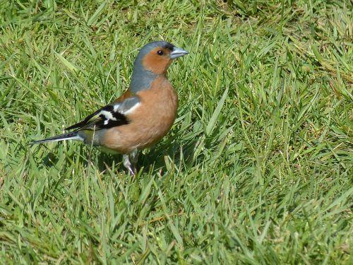 bird animal nature