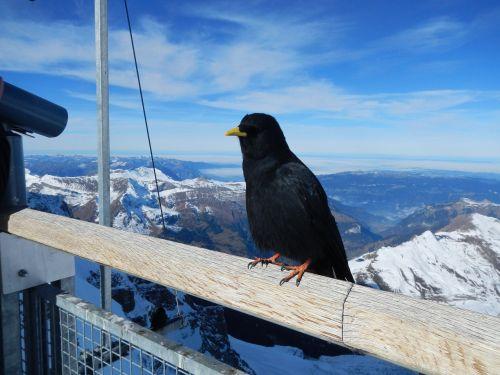 bird mountains snow