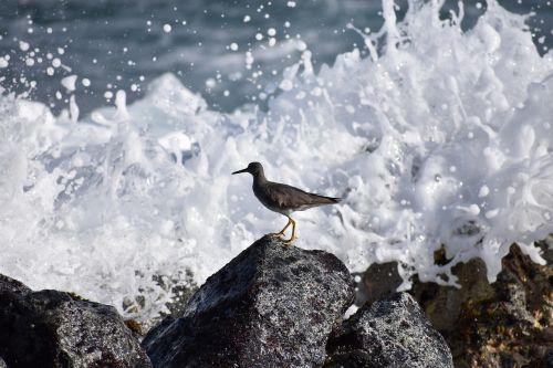 bird shorebird splash