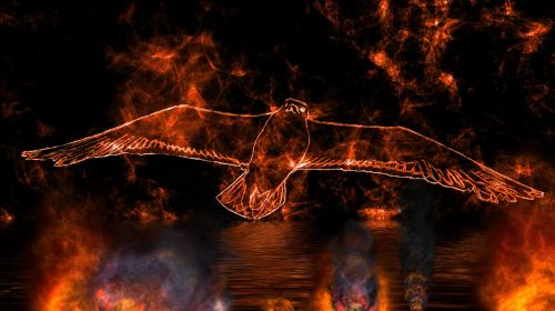 bird fly fantasy