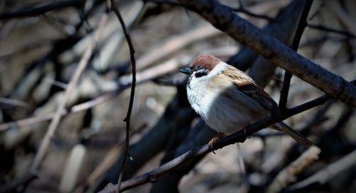 bird animals perched