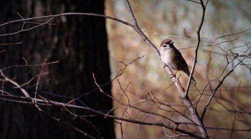 bird animal perched