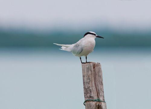 bird area program services break