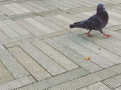 bird portland oregon