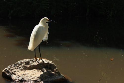 bird goose paige
