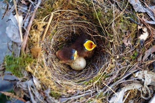 bird birds robin