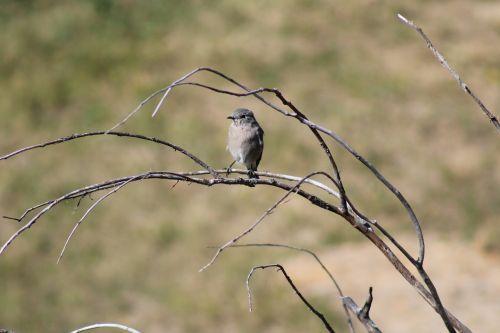 bird nature montana