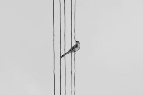 bird nature birdie