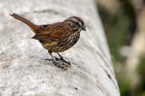 bird sparrow wildlife