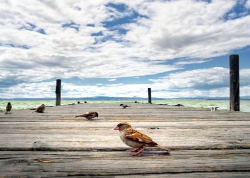 bird albufera jetty