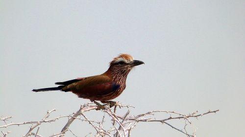 bird wildlife namibia