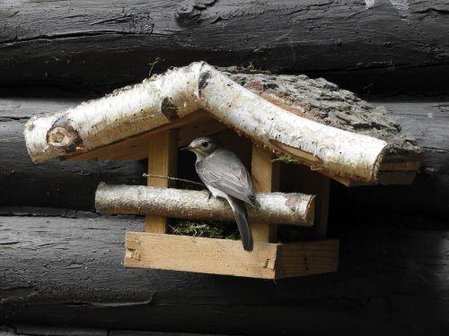 bird bird feeder nest