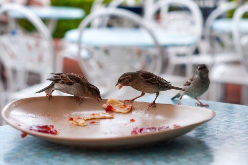 bird plate restaurant
