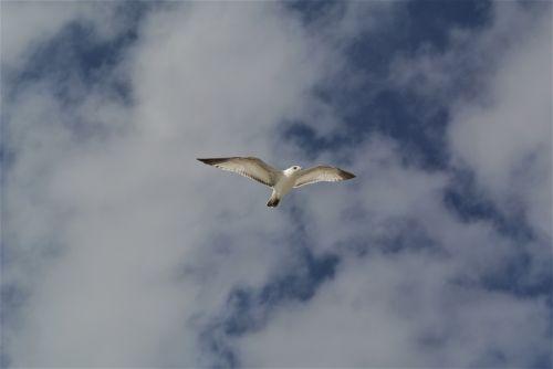 bird sky soaring