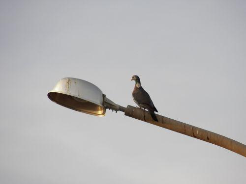 bird streetlamp lamp