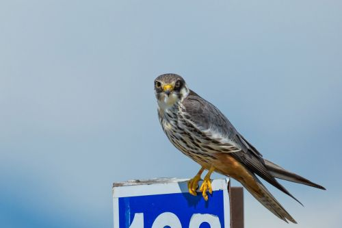 bird strawberries falcon road signs