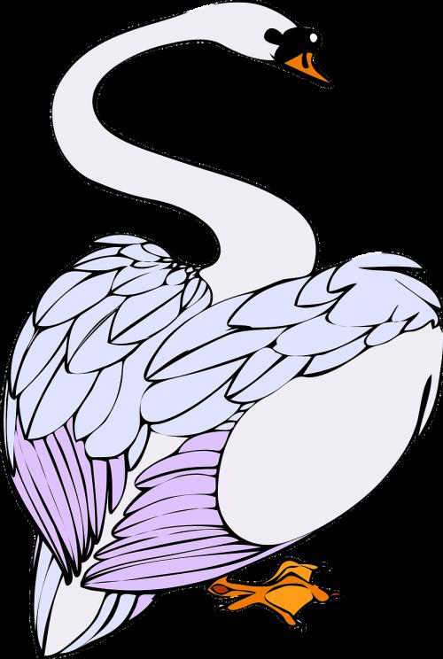 bird swan white