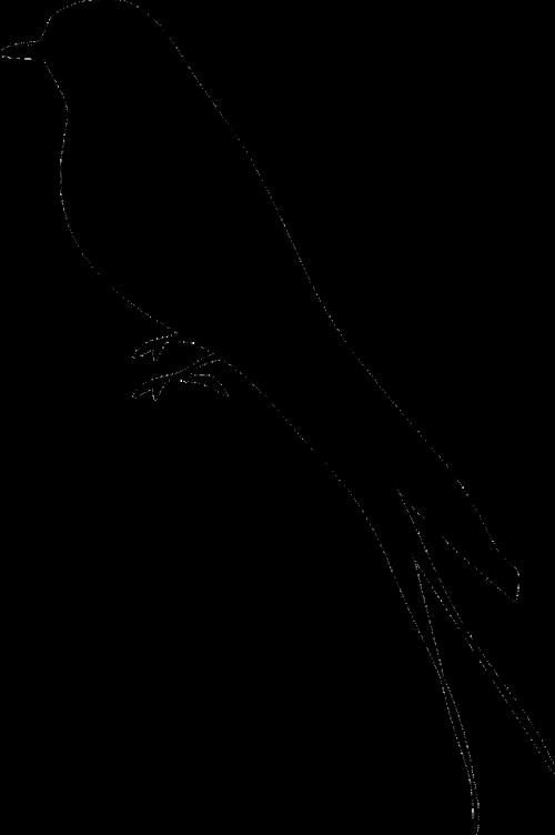bird silhouette mockingbird