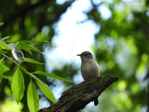 bird branch forest