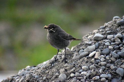 bird robin nest box