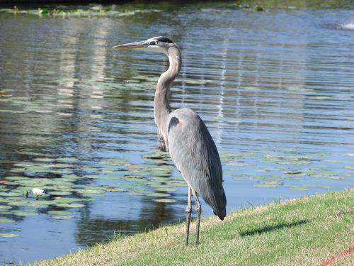 bird river water