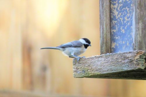 bird tiny wildlife