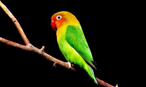 bird parrot colorful
