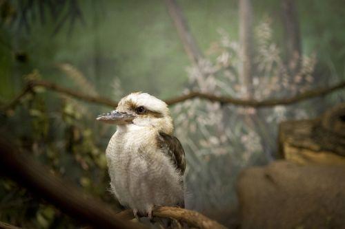 bird pointy beak bird at zoo