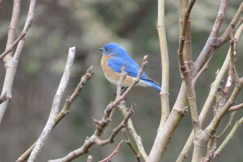 bird blue nature