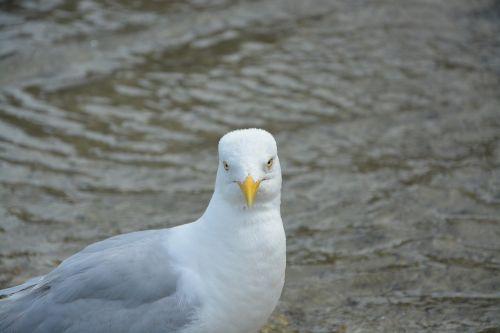 bird head face green eyes