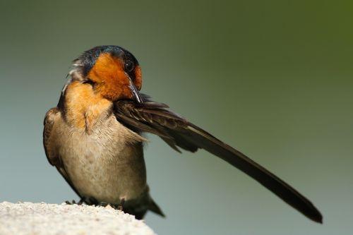 bird wings beak