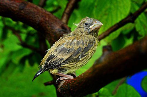 bird bird-chick chick