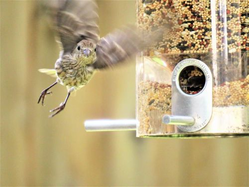 bird in flight wildlife