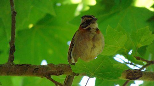 bird nature tatu