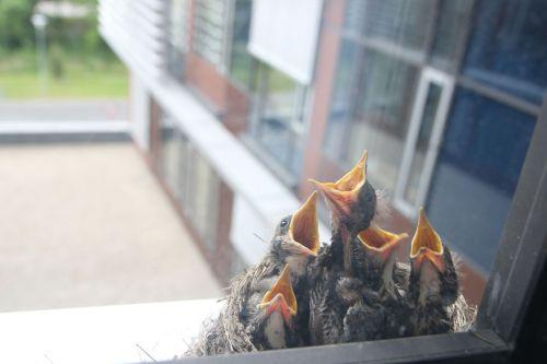 bird cub nest