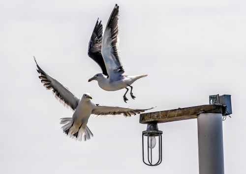 bird litoral mar