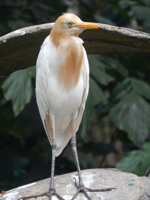 bird conserve white