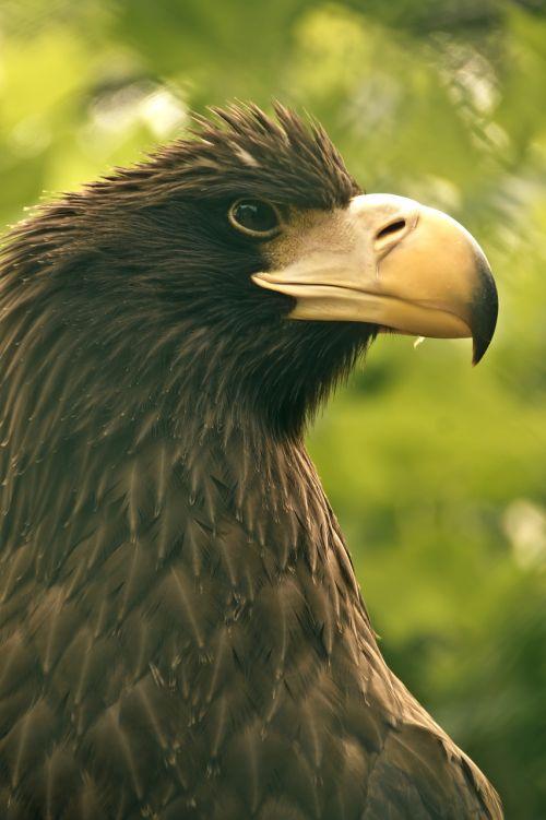 bird eagle beak