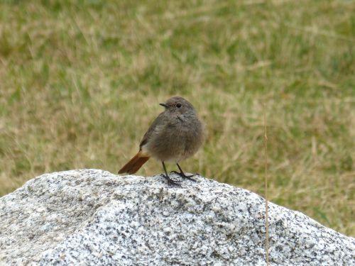 bird rock prado