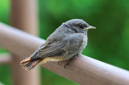 bird perched nature