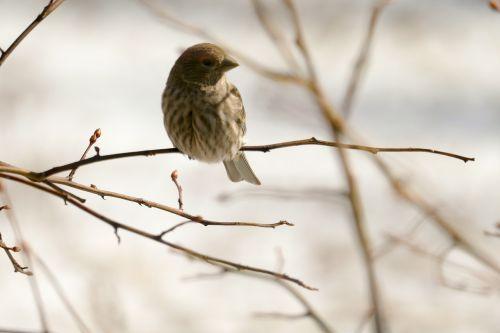 bird house finch nature