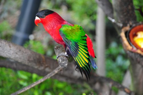 paukštis,tropikai,papūga