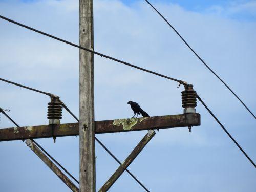 bird wire electricity