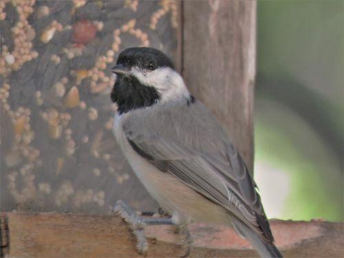 bird tiny close up