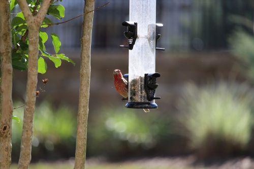 bird chewing food