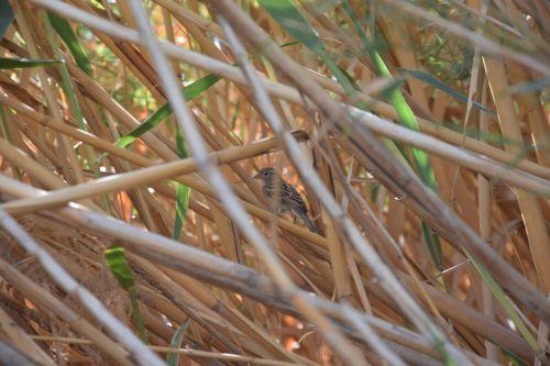 bird nature natural