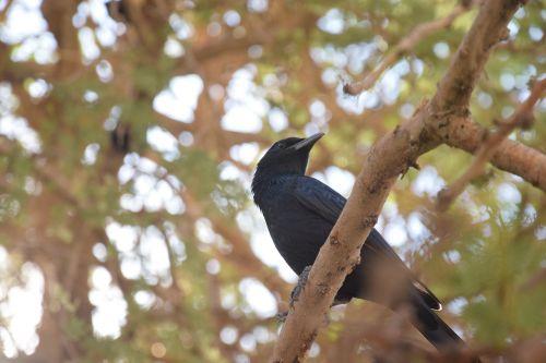 bird oasis animal