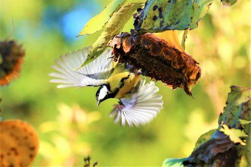 bird sun flower autumn