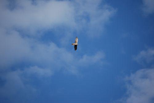 bird flight nature