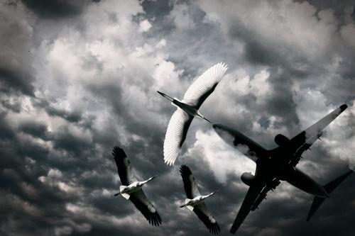 bird aeroplane sky